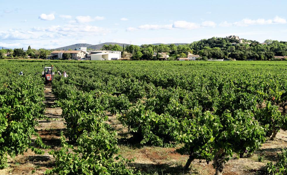 Le territoire est classé 1ère région viticole mondiale selon Sud de France Développement @bruno doan